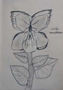 Viola Morphinae - Art Journal by ViolaCaeli