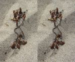 Stereograph - Seaweed by alanbecker