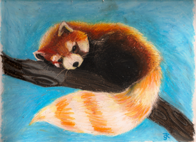 Red Panda by Orceh
