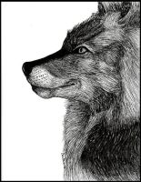 Ink Wolf by ART-fromthe-HEART