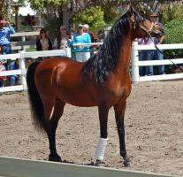 horse stock 12 by Jumper4Jesus88