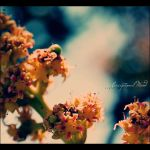 . . it's spring II . . by Exceptional-Mind