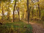 Woodland Trail Landscape 08 by FantasyStock