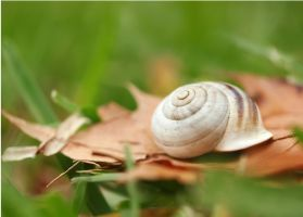 Autumn Snail. by PiecesOfAnsley