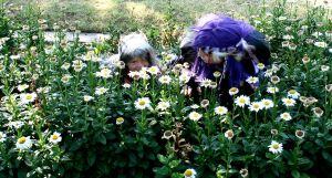 Hiding in the daisies by Otaku4evr