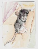 Baby dumbo rat by theillustratedrat