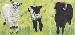 Sheep Family ATCs by sorjei