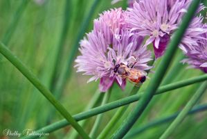 Busy Bee by ShelbyMelissa