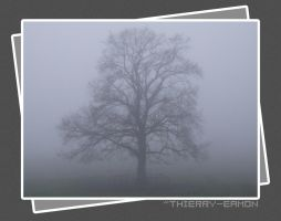 Tree in Fog by thierry-eamon
