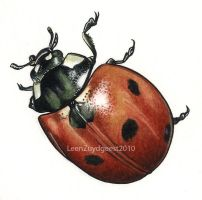 Sevenspotted lady beetle by LeenZuydgeest