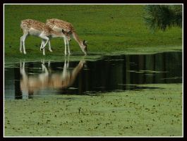 Watering Place by kanes