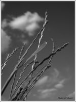 Spring sky in black and white by bwanot