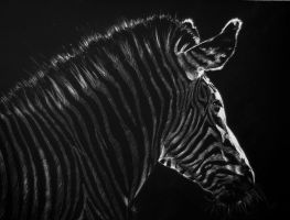 - Zebra - by AquilaChrysaetos