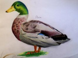 quack by Toffisafee
