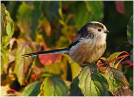 Long Tail Tit. by andy-j-s