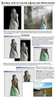 Colouring a photo by tutorial