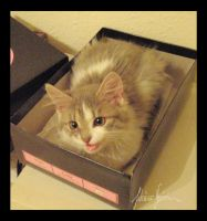 Destin in the Shoe Box by Nojjesz