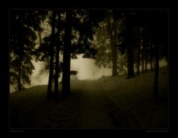 Mysterious forest by kedrigern