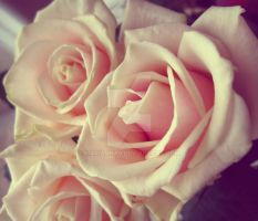 Cream roses by Marianna9