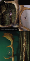 Spider on Antler Walking Stick by TheCopperDragon2004