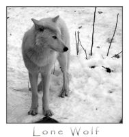 CJProductions - Lone Wolf by CJproductions