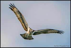 Incoming Osprey by AirshowDave