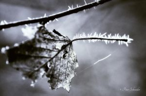Fragile ......Coold breez befor eternity. by Phototubby