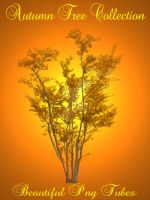 Autumn tree collection PNG by kayshalady