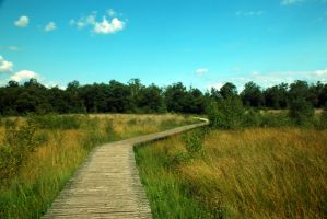 Wooden Path Stock 2 by BirdsistersStock