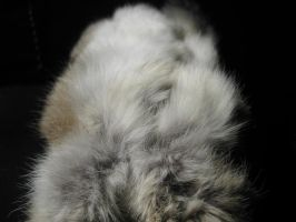 Rabbit Fur 30 by TRANS4MATICA