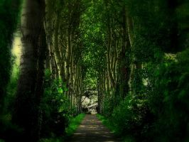 The path of trees by serajaa