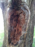 Mouth of the Tree by creecreehoneybees