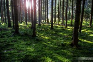 German Forest by NickBaker1689