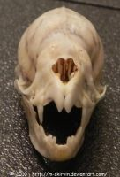 Vampire Bat Skull II by M-Skirvin