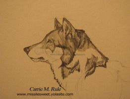 Wolf in pencil by Lurid-Dreamer
