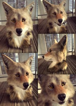 Coyote mask by InerriCreatures