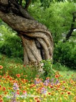 Old Man Tree by mudhead1