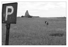 Sign, chapel ruins, and cow by nordstrom