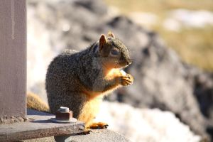 Squirrel 2 by candy691977