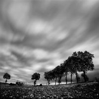 9 trees in the wind by Loran31