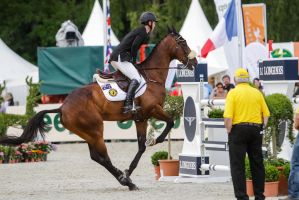 3DE Show Jumping Phase Bitless Stock 42 by LuDa-Stock