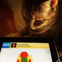 Cat Draw Something by wiebkefesch