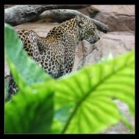 Leopard 12 by Globaludodesign
