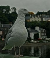 Guardian of Portree Harbour by gee231205