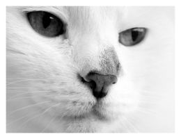 White Cat V by rafalhyps