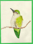 Female Ruby-Throated Hummingbird by superninjamonkeys