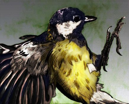 Great Tit by Undercoverpillow