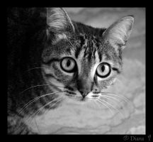 Cat Portrait III by DianaLobriglio