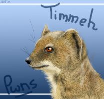 Timmy the Mongoose by neecolette