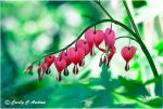 Bleeding Heart by CecilyAndreuArtwork
